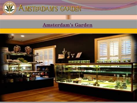Amsterdam Garden San Jose by San Jose Marijuana Dispensary