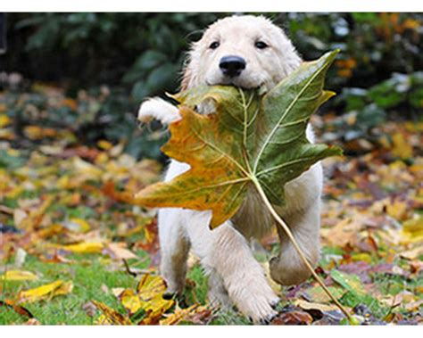 playful puppy images playful puppies theme