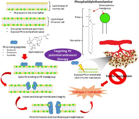 frontiers targeting membrane lipid  potential cancer