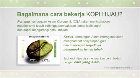 green coffee kopi pelangsing tubuh kopi hijau untuk
