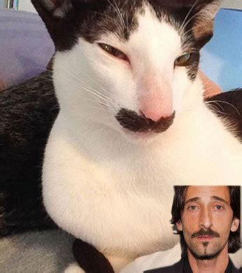 Adrien Brody Meme - photo la m 234 me moustache qu adrien brody