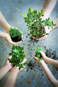 Starting Indoor Vegetable Garden - hands amp plants