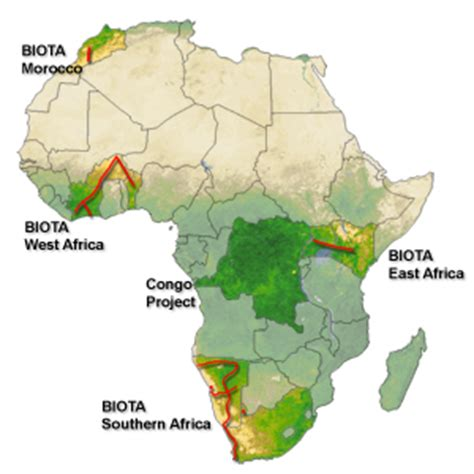 Sections Of Africa by Biota Africa