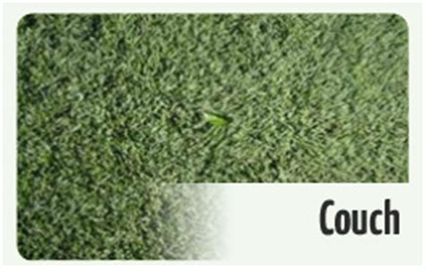 couch grass seeds eturf