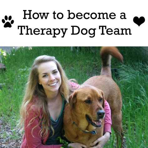 how to a puppy to be a therapy becoming a therapy team the unaccomplished
