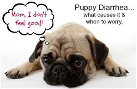 what can i give my puppy for diarrhea what to give puppy for diarrhea pets world