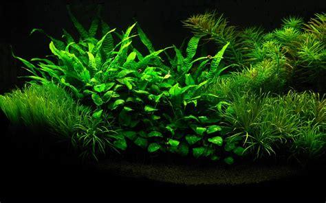 aquarium design hd hd wallpapers