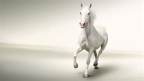 wallpaper for desktop running horse running horse hd wallpaper horse images desktop wallpapers