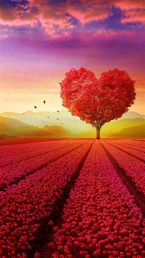 love heart shape tree flowers  pure  ultra