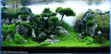 planted tank reaching by robertus hartono aquarium