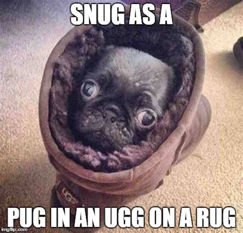 Pug Life Meme - pug life imgflip