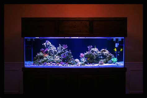 reef aquascaping ideas aquascaping pictures ideas and sketches page 2 reef2reef saltwater and reef