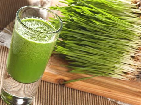 Wheatgrass Detox Side Effects by Wheatgrass Benefits Side Effects And More