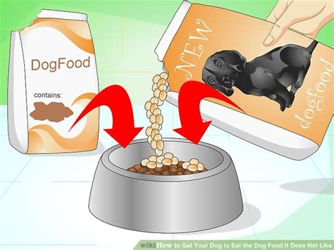 how to get my puppy to eat how to get your to eat the food it does not like 14 steps
