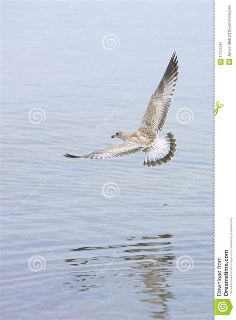 coming in for a landing ten years flying in the islands books coming in for a landing royalty free stock photos image