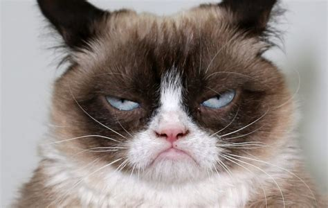 Grumpy Face Meme - grumpy cat sued a coffee company and won nme