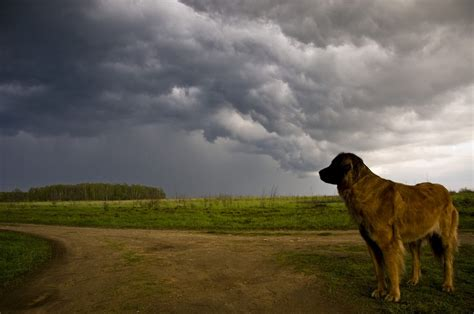 how to comfort a dog during thunderstorms what to do when your dog s afraid of thunderstorms