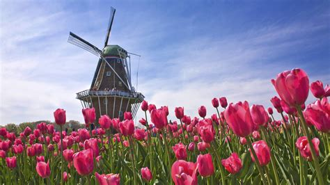 tulip field holland wallpapers best wallpapers