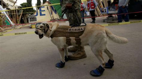 frida rescue meet frida the rescue who emerged as of mexican earthquake