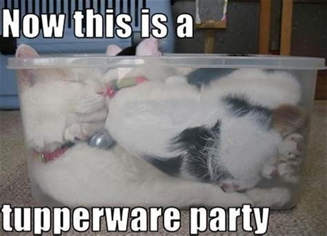 Party Animal Meme - funny pictures 41 pics