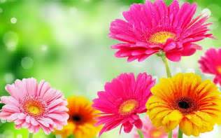 a list of springtime flowers flowerstation