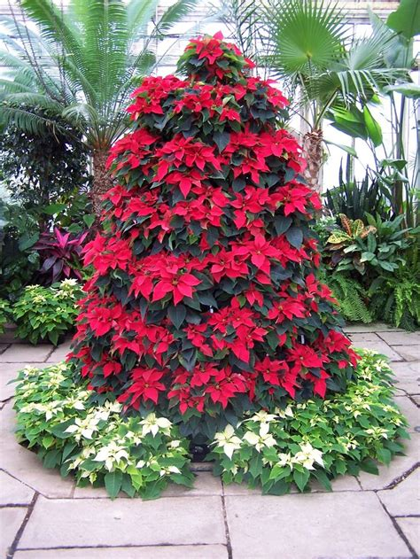 poinsettia tree gorgeous christmas ideas pinterest