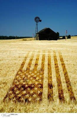 Kaos Aacx Historical Bale 3 Tx 37 best hay bales images on hay bales straw bales and cookie