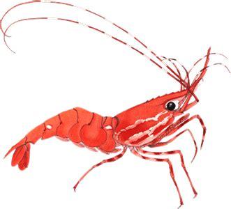 shrimp clip shrimp clipart www pixshark images galleries with