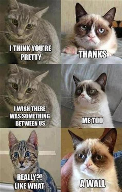 Tard The Cat Meme - grumpycat tard cats grumpy cat pinterest