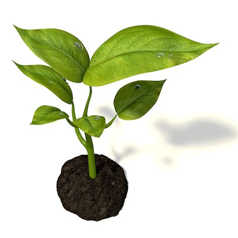 little plants small plant 3d model obj 3ds fbx blend cgtrader com