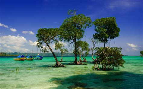 best places to travel andaman islands india best places to travel in 2016