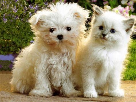 latest funny pictures kittens  puppies