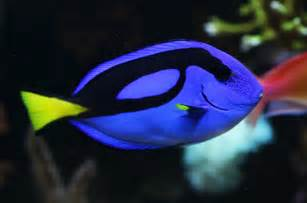what color are fish saltwater fish