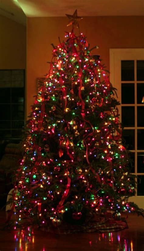 christmas tree with multicolor lights rainforest islands