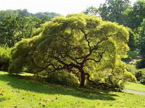 cool tree trees woody plant free images from science prof