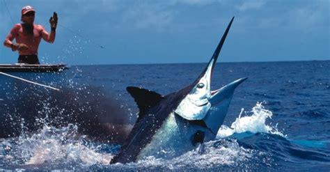 Fishing 15 Ikan kapal ikan indonesia dimusnahkan australia atas dugaan