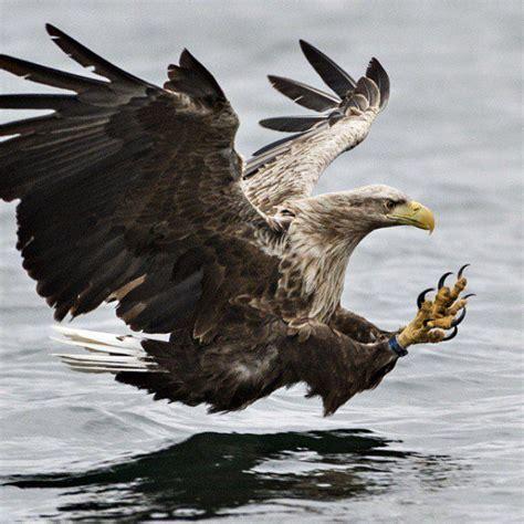 imagenes impresionantes animales salvajes las 25 mejores ideas sobre animales salvajes en pinterest