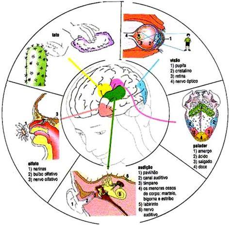 imagenes sensoriales del gusto como estimular la visi 243 n el o 237 do el tacto el gusto y el