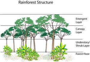 Layers Of The Rainforest Canopy by Rainforest Layers The Rainforest Layers Funny Pictures