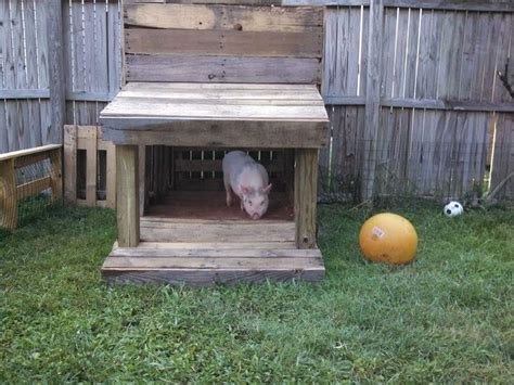 mini pot belly pig outdoor housing 86 best images about outdoor housing exles on