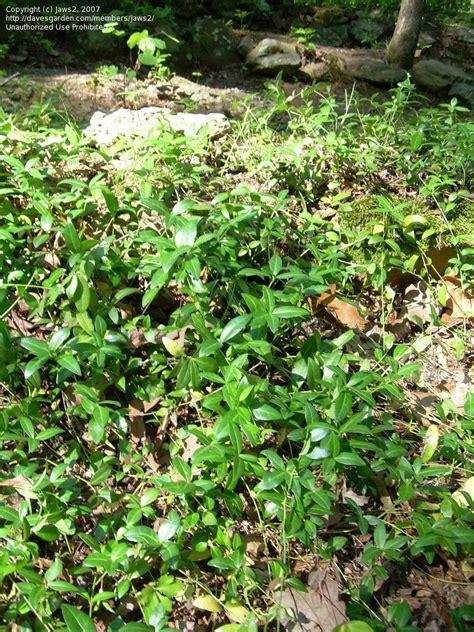 Gardening Help Beginner Gardening Help Oak Trees 1 By Jaws2