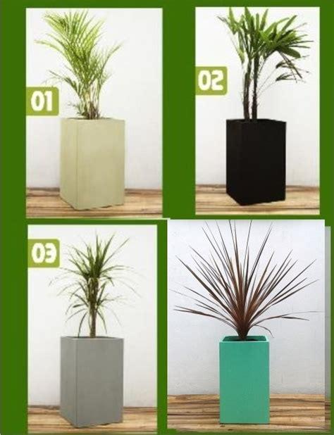 macetas para interiores plantas para macetas ideas originales para colocar tus