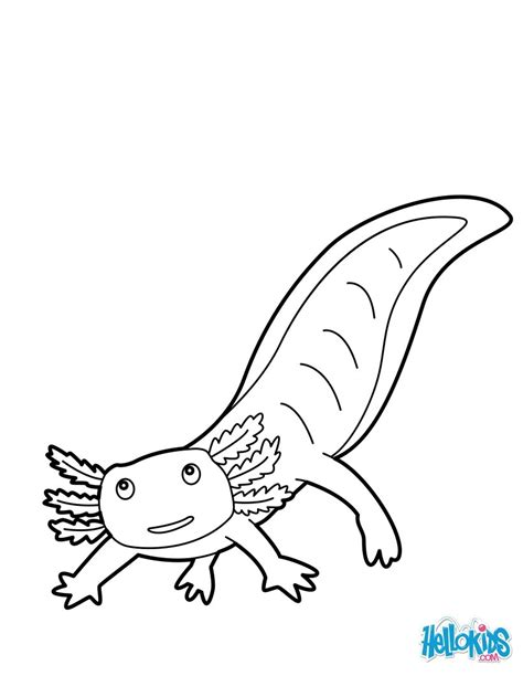 Axolotl Coloring Page by Mexican Salamander Coloring Pages Hellokids