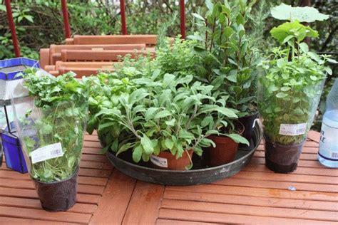 schnecken im hochbeet was tun pflanzen gegen schnecken gartenversand richard ward