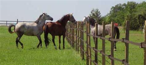 cl 244 ture pour chevaux les bons choix videsellerie