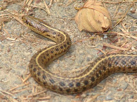 garden snake shutterbug