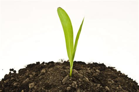 4 designer images of growing plants in soil
