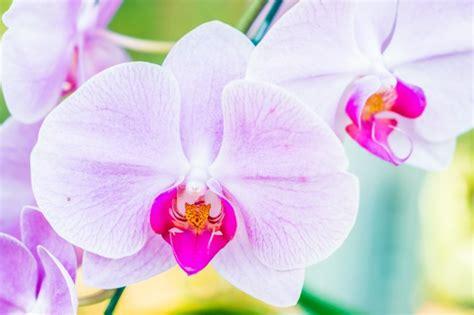 fiore orchidea fiore di orchidea scaricare foto gratis