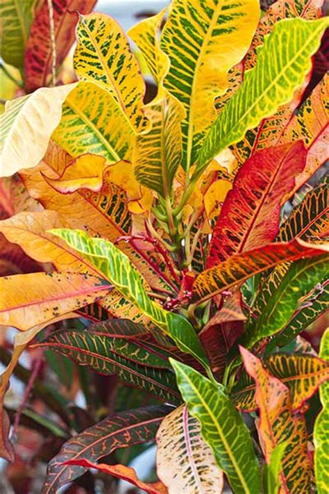 fall plants our top picks for fall fabulous plants