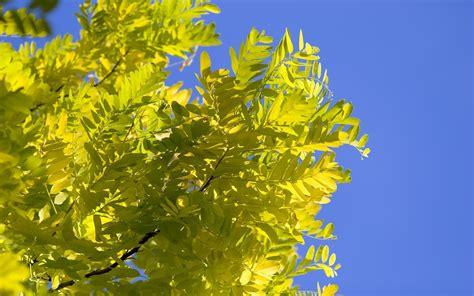 wallpaper daun resolusi tinggi hijau daun hd wallpaper desktop lebar definisi tinggi